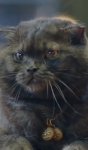 Da Qing kočka 1
