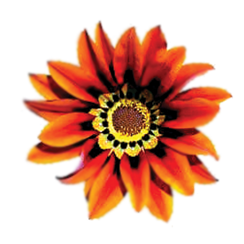 Flowers-002