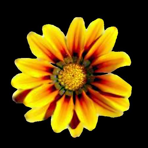 Flowers-009