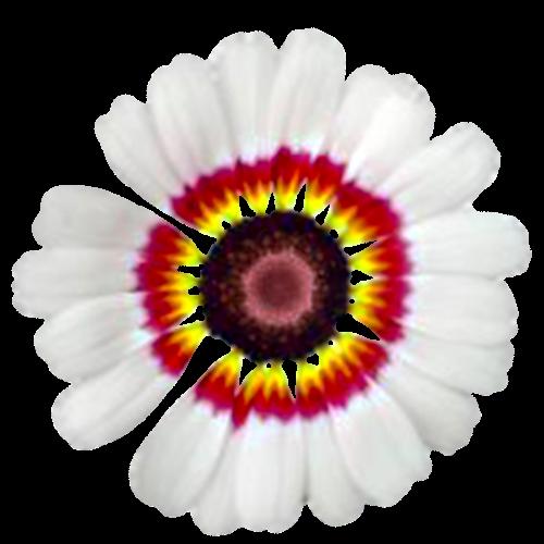 Flowers-028