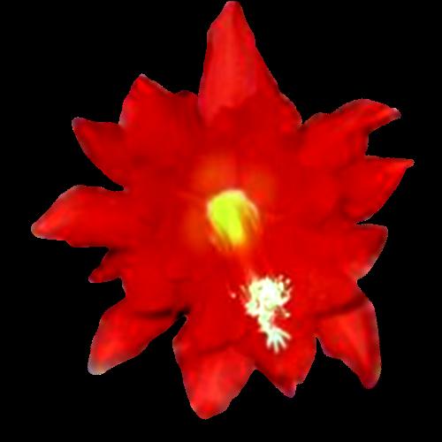 Flowers-035