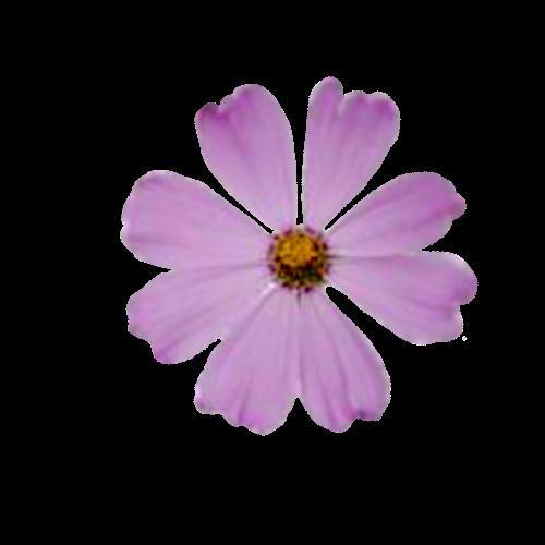 Flowers-041