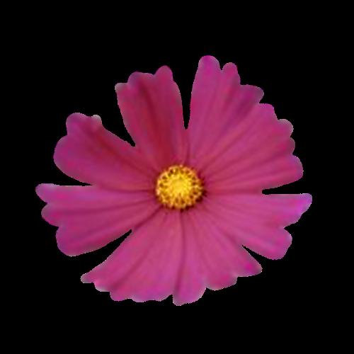Flowers-042