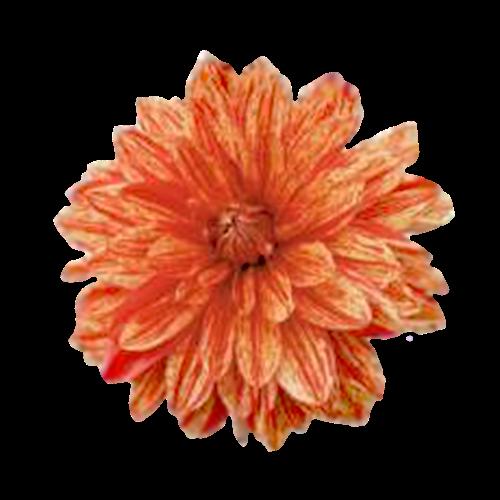 Flowers-jiriny-004