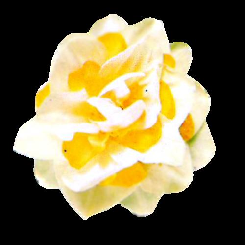 Flowers-karafiaty-001