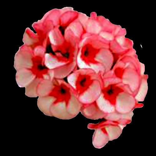 Flowers-karafiaty-004