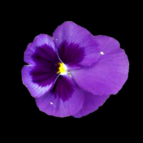 Flowers-macesky-002