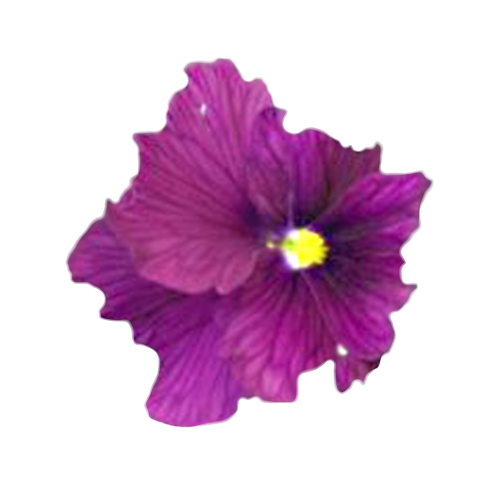 Flowers-macesky-003