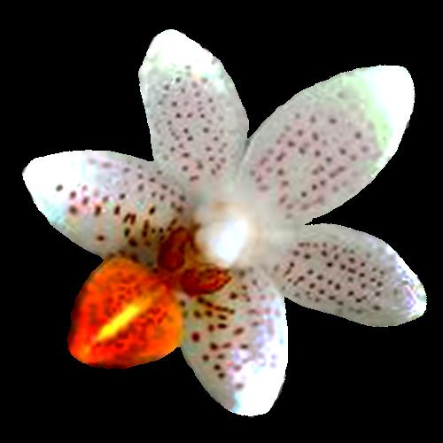 Flowers-orchidej-006