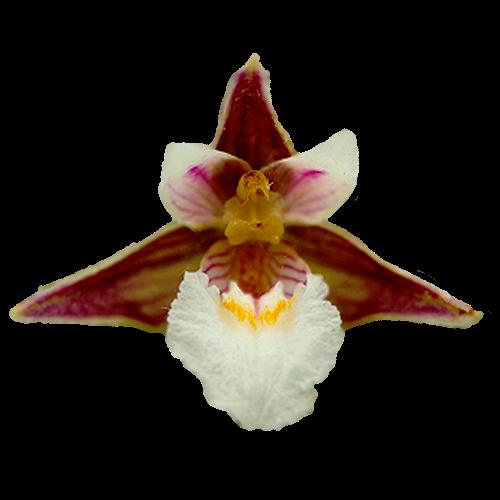 Flowers-orchidej-007