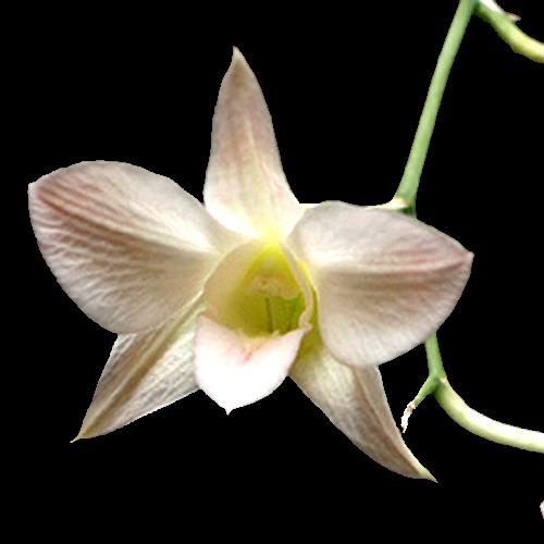 Flowers-orchidej-012