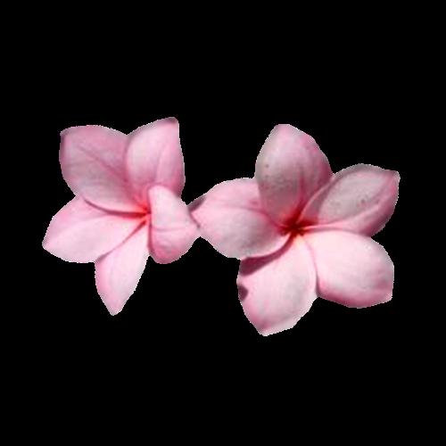 Flowers-orchidej-014