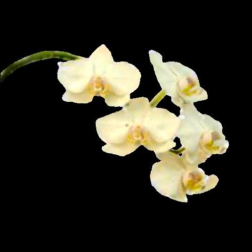 Flowers-orchidej-052