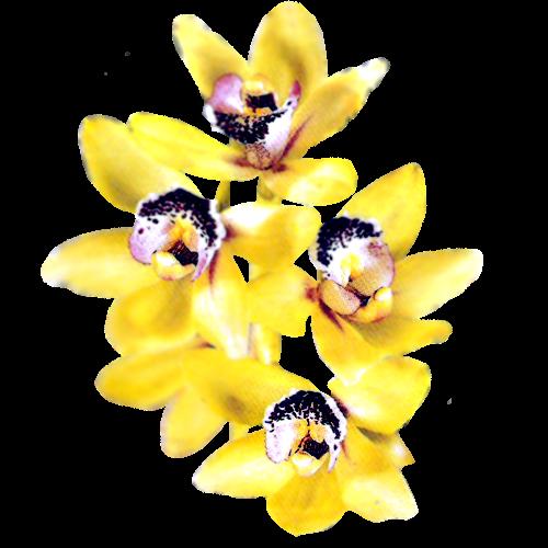 Flowers-orchidej-054