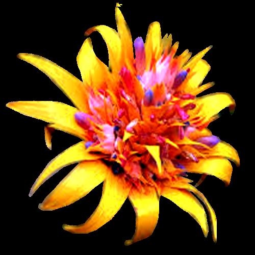 flowers-tropik-007