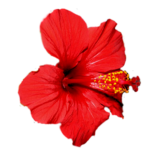 flowers-tropik-011
