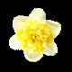 Flowers-cibuloviny-marciska-01