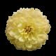 Flowers-jiriny-001