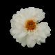 Flowers-jiriny-002