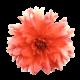 Flowers-jiriny-003