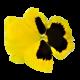 Flowers-macesky-001
