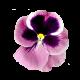 Flowers-macesky-004