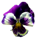 Flowers-macesky-005