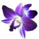 Flowers-orchidej-002