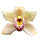 Flowers-orchidej-003