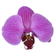 Flowers-orchidej-005