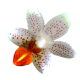Flowers-orchidej-006