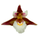 Flowers-orchidej-007