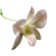 Flowers-orchidej-011