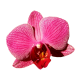 Flowers-orchidej-013