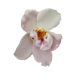 Flowers-orchidej-015