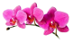 Flowers-orchidej-051