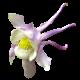 Flowers-orlicek-001