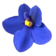 flowers-fialky-01