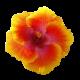 flowers-tropik-002