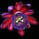 flowers-tropik-003