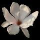 flowers-tropik-004