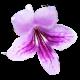 flowers-tropik-005