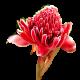 flowers-tropik-006