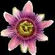 flowers-tropik-008