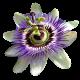 flowers-tropik-009