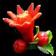 flowers-tropik-010