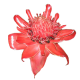 flowers-tropik-013