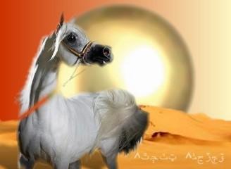 Arab_01