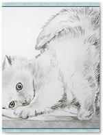 kocky 2-kote