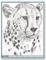 kocky-gepard